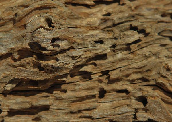 Termites Damaged